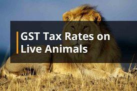 GST Rates Live Animals