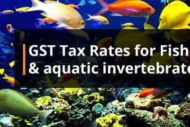 Gst rates on Fish and water animals